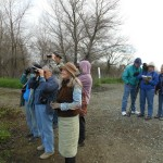Birders at the Colusa NWR