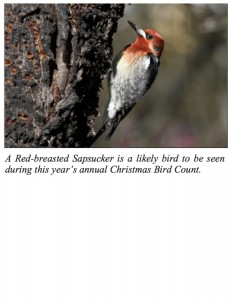 Red Breasted Sap Sucker