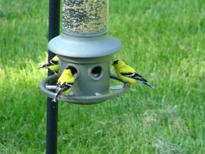 GoldFinch Party3